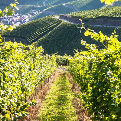 Wine Country Germany